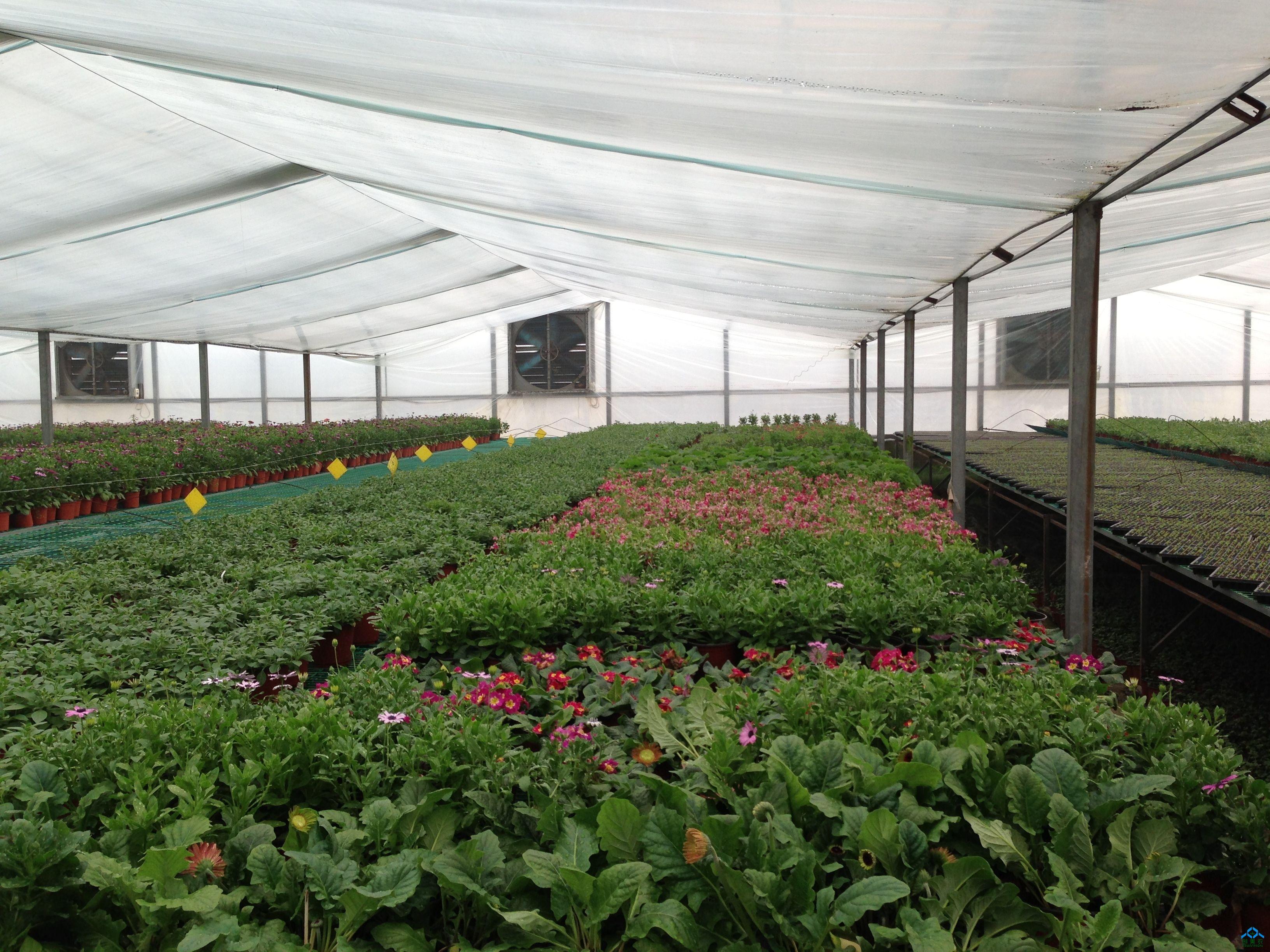在防虫网覆盖后至温室大棚种植蔬菜前