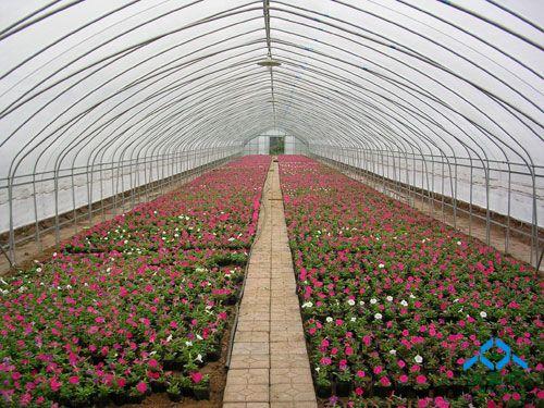 因为塑料大棚的造价比较低,又非常适合种植花卉蔬菜这些作物.