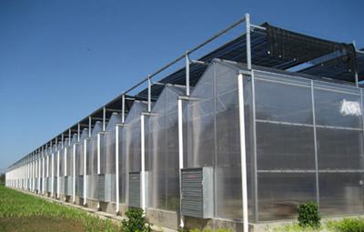 河南温室-温室大棚用pc阳光板特性分析!