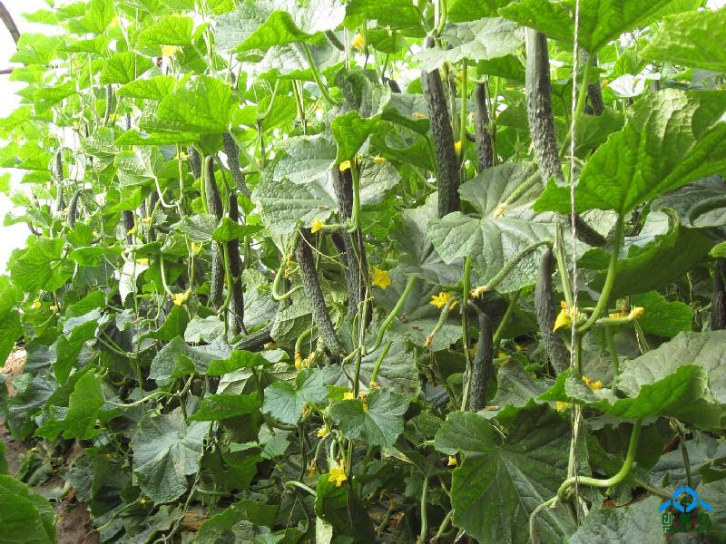 智能蔬菜温室大棚