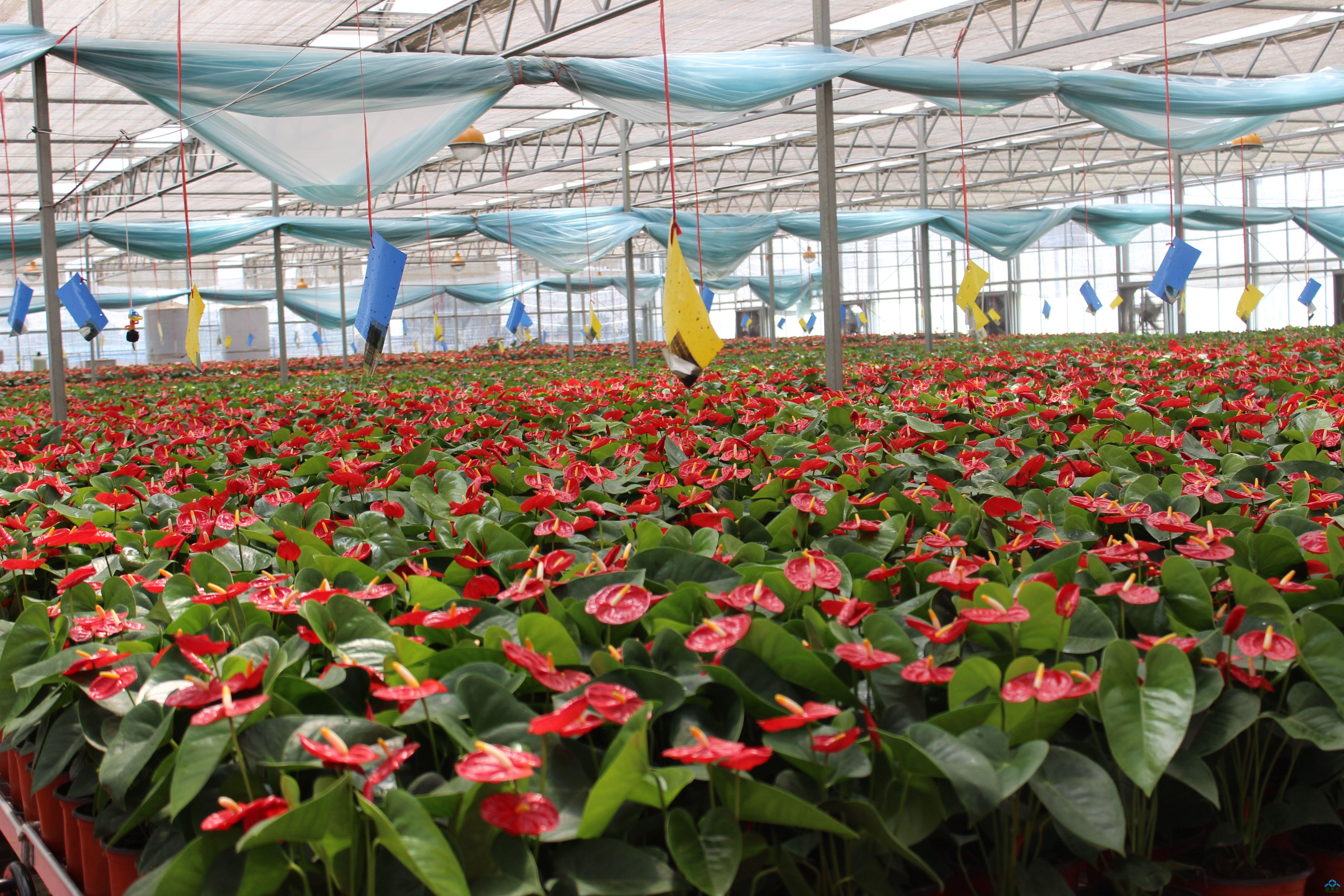 2017新型农业花卉温室大棚