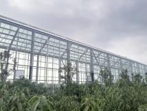 新型钢结构温室展示