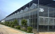 什么是纹络型玻璃温室,方位尺寸如何设计